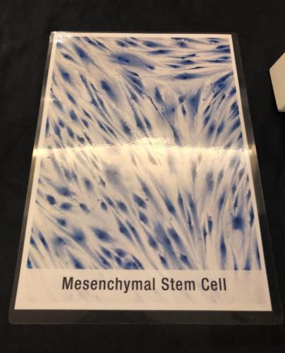 Stem cell talk@Majestic Hotel (15.04 (17)